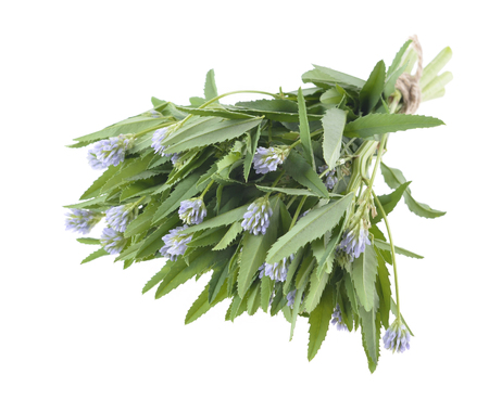 foenum graecum, Fenugreek, Methi, herb with  leaves, seeds used in spices and flavouring