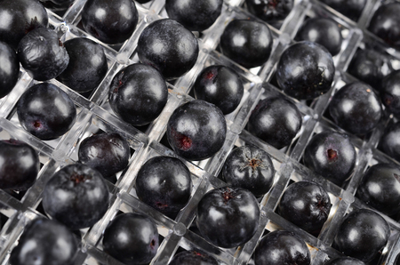 Aronia in a fruit dryer