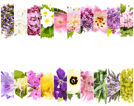 beautiful flowers collage with text space