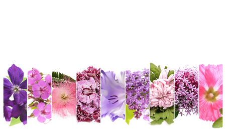 clematis: beautiful flowers collage with text space