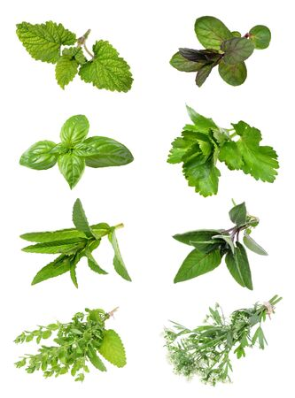 Conjunto de hierbas frescas sobre un fondo blanco aislado