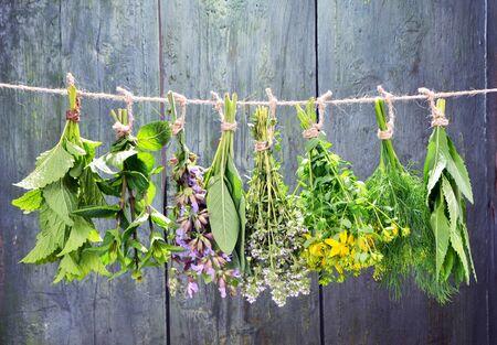 Conjunto de hierbas frescas colgando sobre fondo vintage de madera