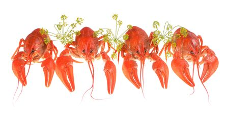 Boiled red crayfish isolated on white background