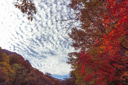 Beautiful colored leaves of Muleung Valley in East Sea