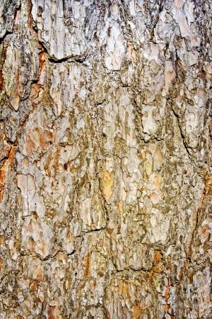 summaries: Pine bark