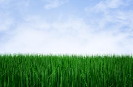 Fresh green grass on the blue sky, 3d illustration