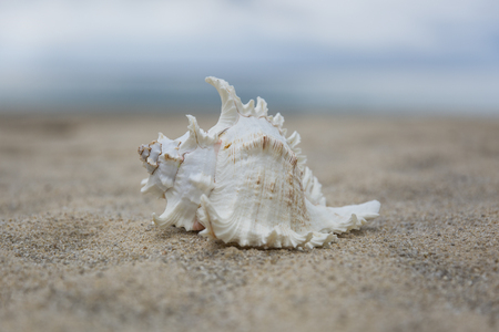 several sea shells on the sand background