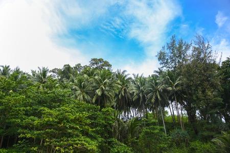 Tropical Palm trees against a blue sky