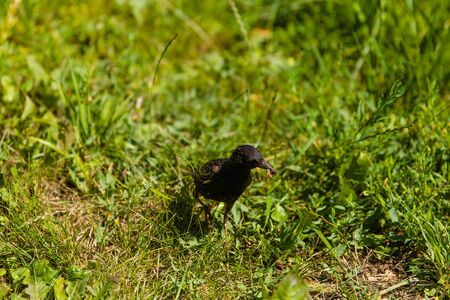 Photo of a small black bird sitting on a branch of a tree.Bird photography of a baby bird.Beautiful black bird waiting for its partner on a tree photo.
