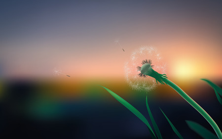 Macro dandelion field on a summer evening Vector