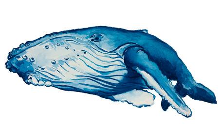 vector watercolor blue humpback whale Illusztráció
