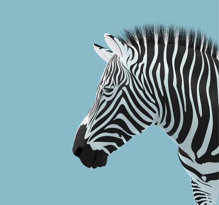 volumetric zebra head on blue background