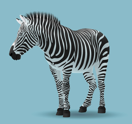 Isolated vector illustration of a Zebra