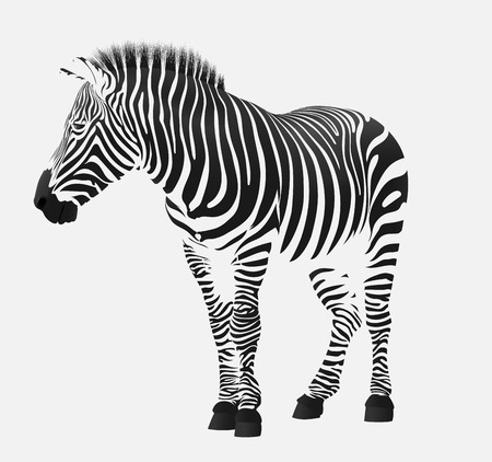 vector illustration of a zebra stripes