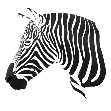 dobbin: the Zebra stripes on white Illustration