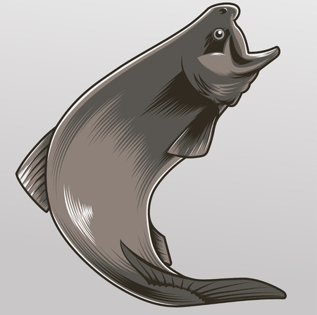 rainbow trout: isolated vector illustration of a jumping trout