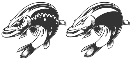 toothy: vector illustration of brutal aggressive toothy pike