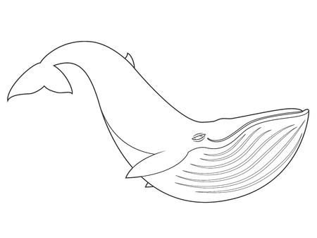 Ilustración De Una Ballena Jorobada En El Fondo Blanco Con El ...