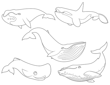 bleached: Outline illustration of set cartoon cute whales on white background for coloring book, sea animals set, collection of sea creatures