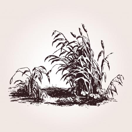 reed: Vintage engraved illustration from Oeuvres de Salomon Gessner - Peintre m  Le Barbir - Paris  1786