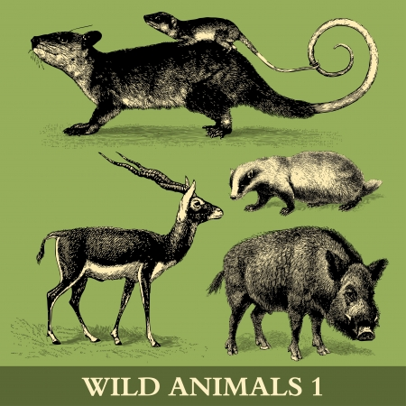 Wild Animals -Engraving Illustrations from  Meyers Konversations-Lexikon, Germany, 1897