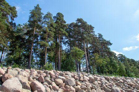 pines growing on the rocks near the sandy beach Stock Photo