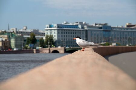 seagull on the parapet of the city embankment on a sunny summer day Archivio Fotografico