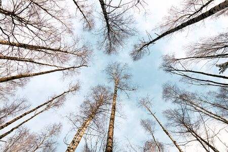 bottom view of the sky in the forest Stok Fotoğraf