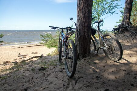 couple of bicycles standing under pine trees on a sandy beach on a sunny summer day
