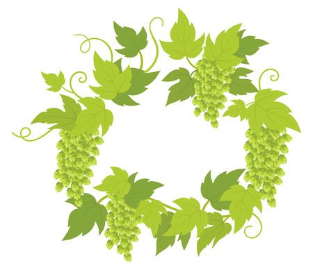 Hop plant frame circle banner. Round place for text. Border frame isolated transparent background. Hop green leaves and cones lupulus humulus brewing. Vector flat Illustration for bar, beer shop or cafe advertising.