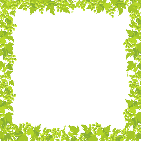 Hop plant frame square banner. Border frame isolated transparent background template. Hop green leaves and cones lupulus humulus brewing. Vector flat Illustration for beer shop or cafe advertising. Place for text.
