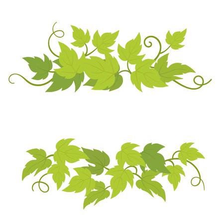 Dekorative Elemente der Traubenpflanze. Weinreben grüne lockige Blätter Dekor. Vektor-flache Illustration. Isolierte transparente Hintergrundvorlage. Vektorgrafik