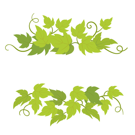 Grape plant decorative elements. Grapevines green curly leaves decor. Vector flat Illustration. Isolated transparent background template.