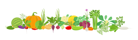 Vegetables harvest banner collage. Popular agricultural plant set. Vector farm plants bunch healthy food on white background. Flat stock clipart for web site header horizontal banner.
