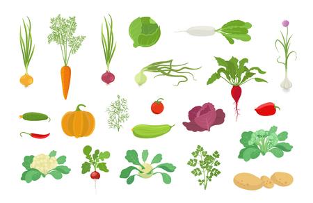 Groenten oogst plant pictogramserie. Vector boerderij planten. Groei aanplant populaire groenten set. Platte voorraad clipart. Ui wortel kool, knoflook pompoen dille tomaat en vele andere.