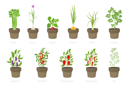 Growing vegetables in a pot. Set of potted plant. Home garden. Tomato, onion pepper and celery growth. Isolated vector illustration on white background.