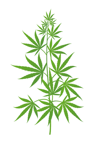 Hemp plant. Marijuana or cannabis sativa green tree. Isolated vector illustration on white background. Medical cannabis.
