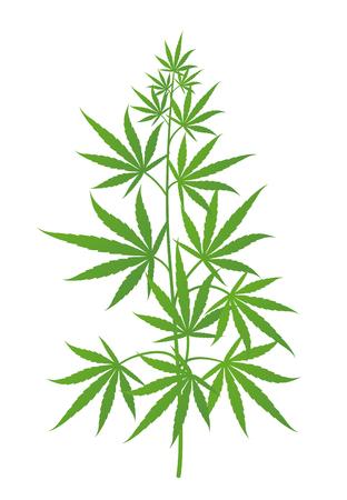Pianta di canapa. Albero verde di marijuana o cannabis sativa. Illustrazione vettoriale isolato su sfondo bianco. Cannabis medica. Vettoriali