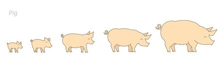 Piglet grow up animation progression.