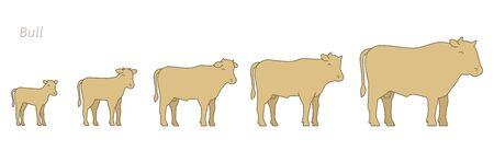 Calf grow up animation progression.