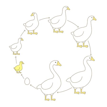 Round Stages of poultry growth set. Breeding fowl. Goose production. Gosling grow up animation circle progression. Flat vector illustration.