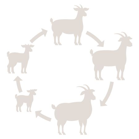 Round Stages of goats growth set. Animal farm. Breeding wool production raising. Lamb grow up animation circle progression. Silhouette Outline contour line vector illustration.