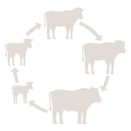 Round Stages of beefs growth set. Breeding beef production. Bull animal farm. Cattle raising. Calf grow up animation circle progression. Silhouette outline contour line vector illustration.  イラスト・ベクター素材