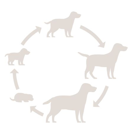 Round stages of dog growth silhouette set. From puppy to adult dog development. Animal mammals pets. Labrador retriever grow up circle animation progression. Pet life cycle.