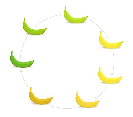 Round banana ripeness stages chart. Circular colour gradation set plant. Ripening plantains. From green to yellow and brown. Animation period progression. Illusztráció