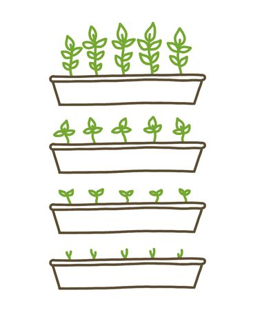Growing seedlings stages. Plant shoots tray. Seedlings agriculture. Development stage animation progression. Ripening period. Vector line hand-drawn sketch.
