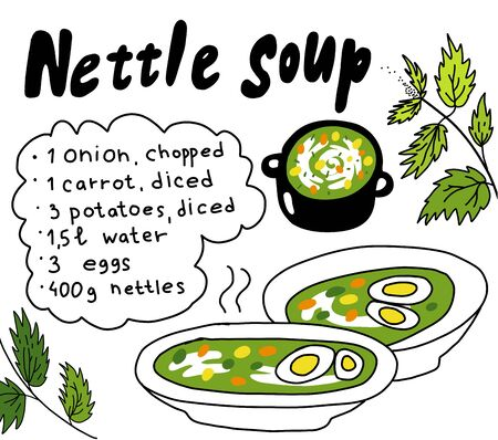 Nettle soup. Summer grass soup recipe. Cooking Ingredients. Hand drawn sketch. Vector cartoon illustration. Tasty and healthy food. Illustration
