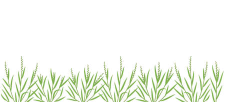 Ryegrass plant green field. Horizontal banner. Fescue grass family poaceae. Lolium. Place for text. Copy space. Agricultural. Vector background. Agronomy clipart.