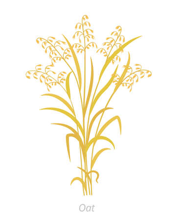 Oat plant. Avena sativa. Bunch of orange ripe and dry grass. Agronomy cereal grain. Vector agricultural illustration clipart.  イラスト・ベクター素材