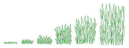Green lawn grass plant growth stages development. Animation progression. Ripening period vector infographic set. Hand drawn sketch.
